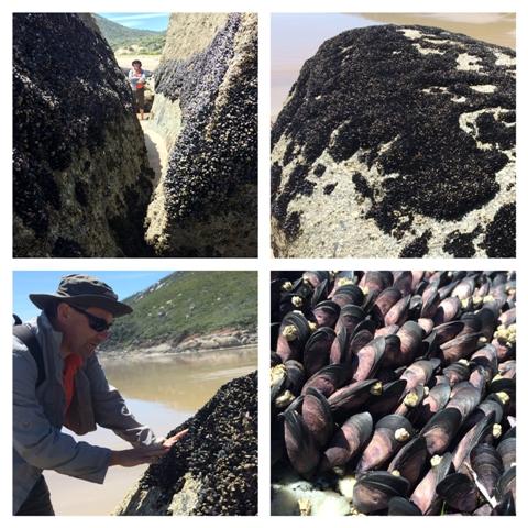 Élő kagylótelepek