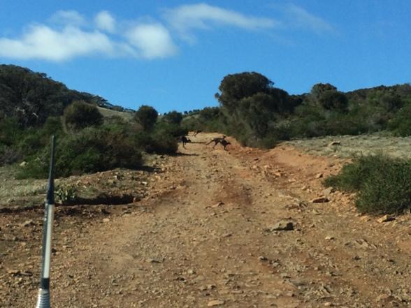 Mozgó kocsiból nem a legjobb minőségű a kép, de talán látszanak a kangák