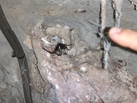 A barlangi pók. Kicsit homályos, de a miénk...