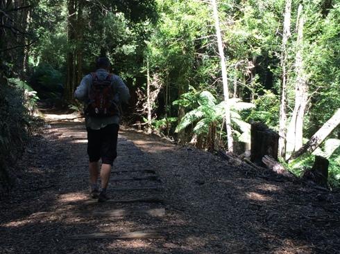 útközben a Montezuma vízeséshez a felhagyott kisvasút nyomvonalán