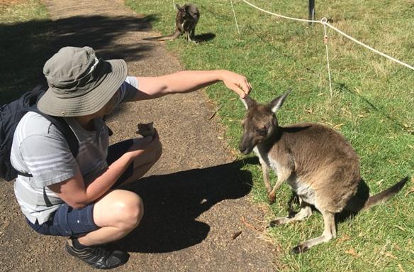 Papi folyton piszkálódik... egyszer majd beboxolnak neki a kenguruk