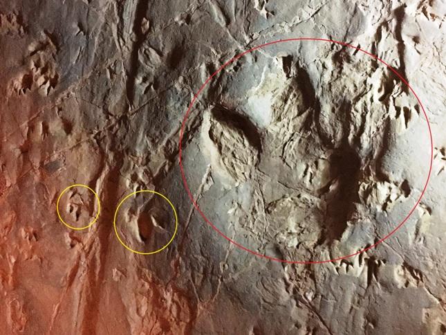 A mi képünk a három különféle dinoszaurusz lábnyommal