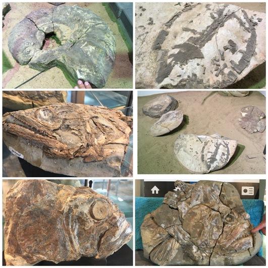Tengeri fosszíliák (ammonita, teknős, hal)