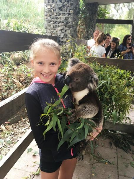 Koala simogatás