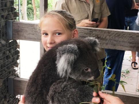 75_koala4