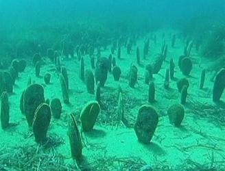 """Hát valahogy így néz ki egy sonka kagyló telep. Internetről leszedett kép, hogy az """"anti-kuglisok""""-nak is legyen fogalma. A víz volt sekélyebb, alig 10-20 cm vízréteg volt a kagylók felett. Ijesztő látvány volt."""
