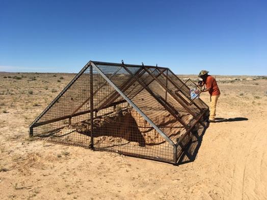 A Simpson sivatag elején Dalhousie Springs-nél elhelyezett szemétgyűjtő hely