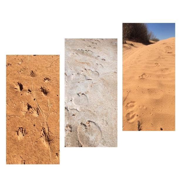 """""""Lábnyomok"""" a sivatagban"""