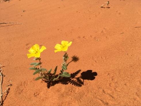 Élet a sivatagban...
